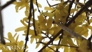春到来!!待ちに待った季節~Vol.2~