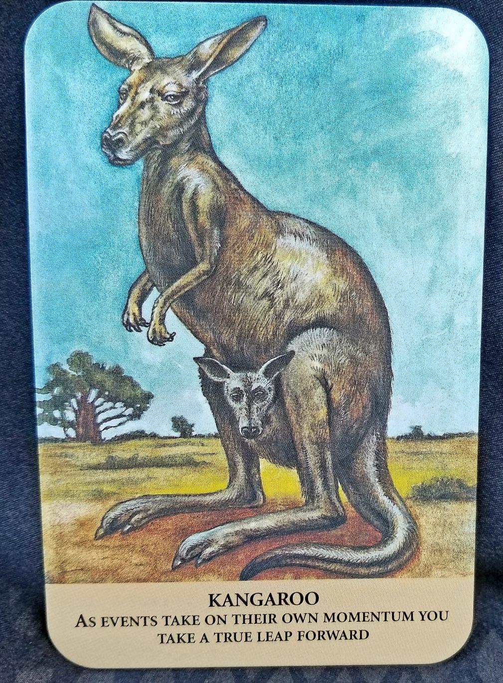 Kangaroo - Animal Oracle Card
