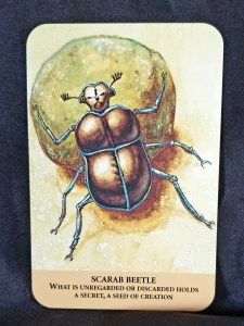 Scarab Beetle - a scarab beetle rolling a piece of dung