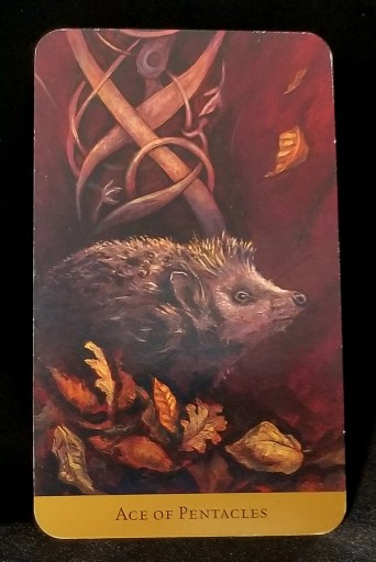 Ace of Pentacles - Tarot Card:  A small hedgehog sitting amidst a pile of autumn leaves.