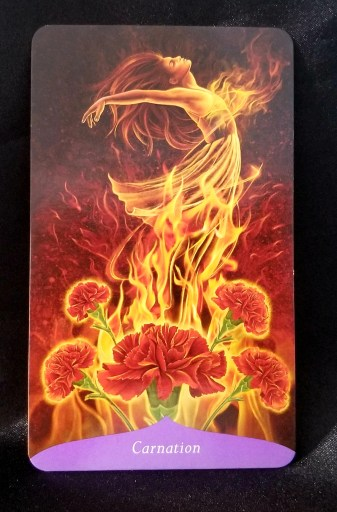 Carnation - Five red carnations, seemingly on fire.  A Woman is transforming amidst the flames.