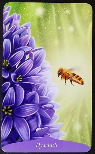Hyacinth - a honeybee is buzzing in front of a large hyacinth blossom.