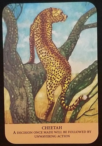 Weekly Oracle Reading - Cheetah