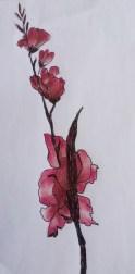 fleurs roses par Claire Archambault