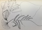feuilles-2-claire