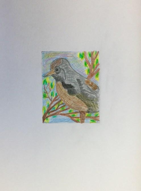oiseau-crayon-de-couleurs-jg-levesque