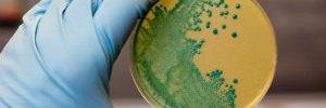 listeria recall