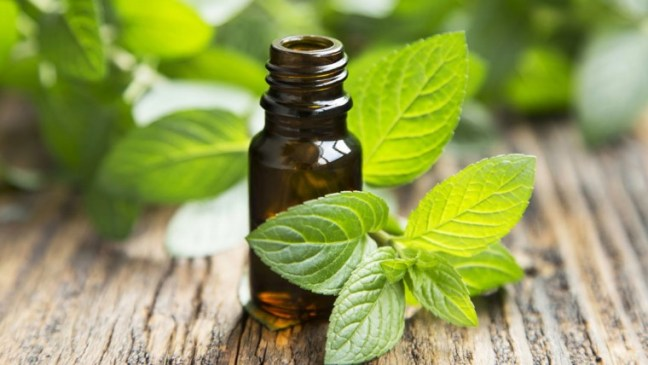 Peppermint-oil-as-essential-oils-for-sore-throat