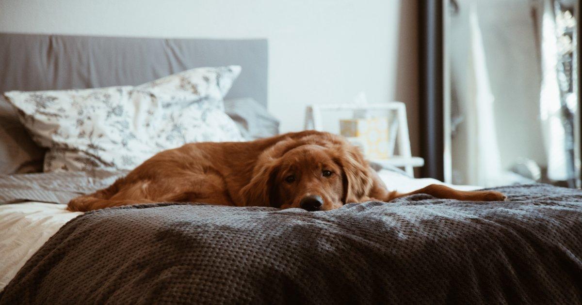 scented dog Aloe Vera