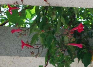 Bangalore airport flower