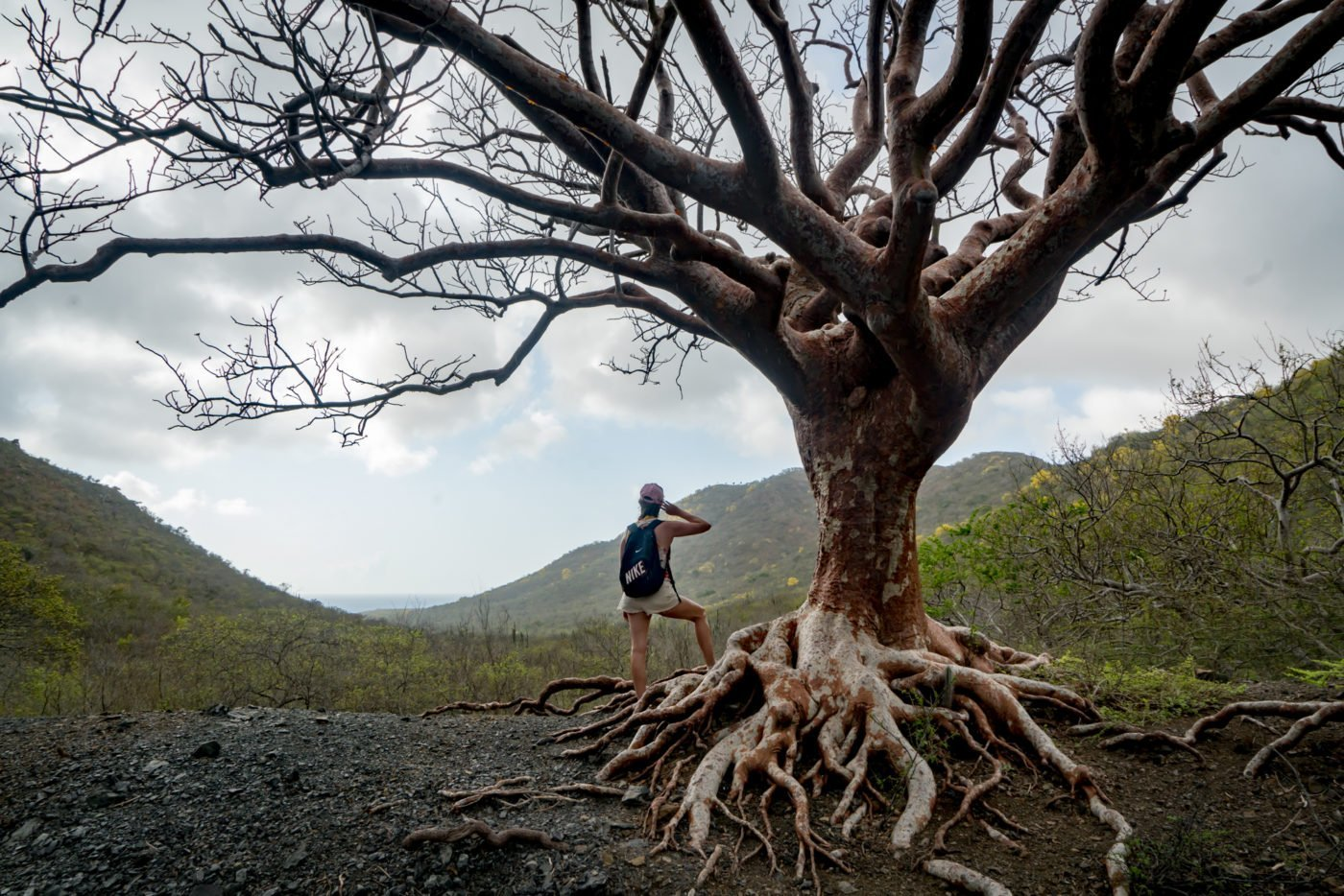 Tree of Life in Curaçao