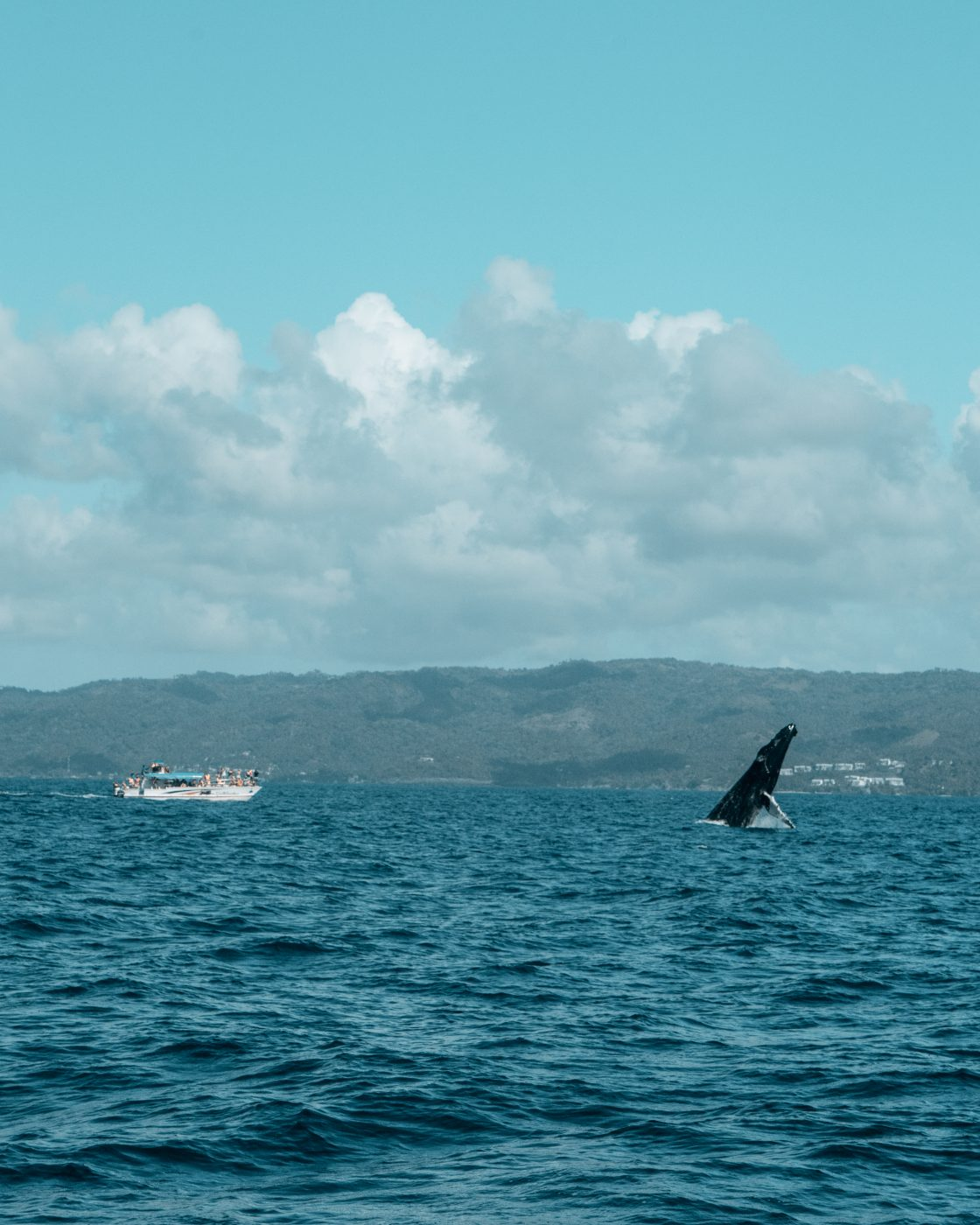 whale watching safari in Samana bay, Dominican Republic