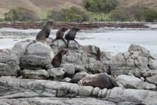 Seal band