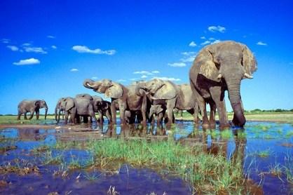 etosha_national_park