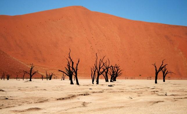 namib desierto