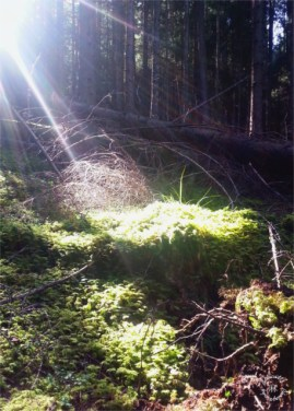 The forest of Volderberg