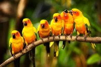 Small Birds Chirp Much Louder Than Their Size | Benign Blog