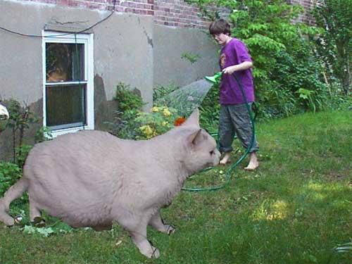 giant_cat.jpg