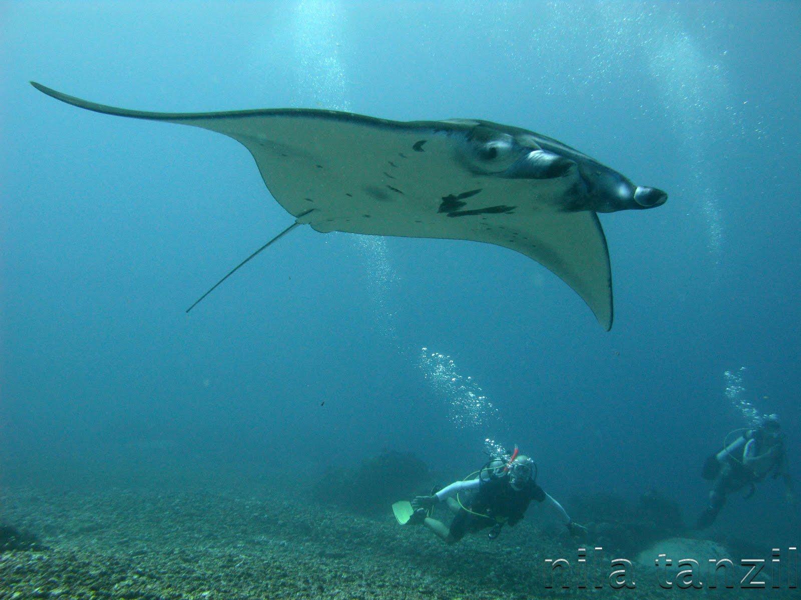 10 Hewan Berbahaya di Laut  Bening Ravampire