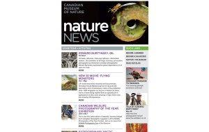 Screenshot showing the top section of the Canadian Museum of Nature custom HTML Email Newsletter