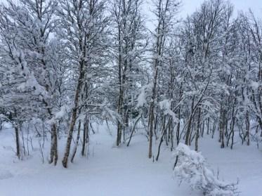One last look at the snow before we left Tromsø.