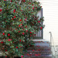 William Garrett Plantation thumbnail