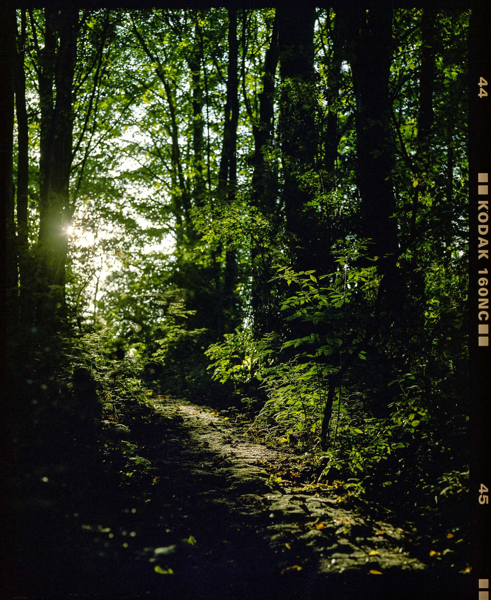a sunlit path in shipley woods, mamiya rb67 and portra 400 film