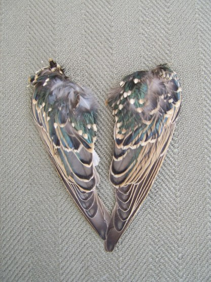 pair of lure wings