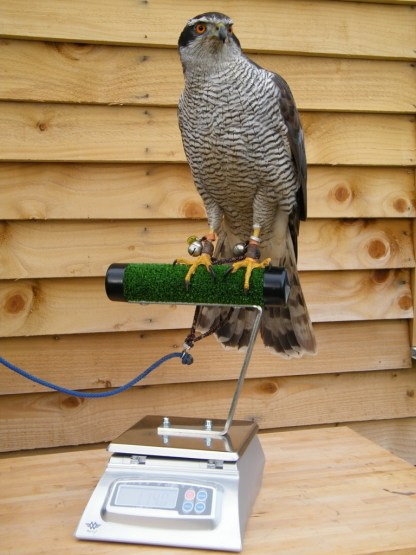 Digital Scale for falconry