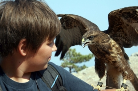 young falconer with bird of prey