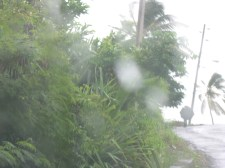 Dominica - Yep Rains about every day