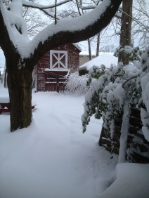 Even the Barn looks better in the snow
