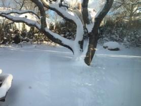 blizzard in my backyard
