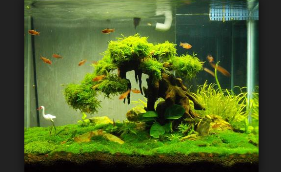 25 Macam Tumbuhan Aquascape Peneman Bonsai Aquarium