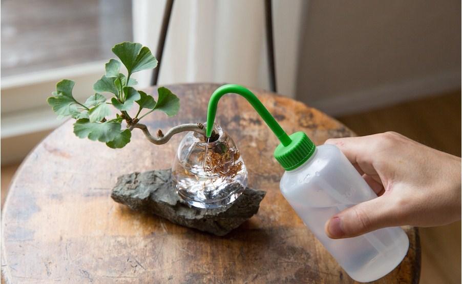 Bonsai Aqua Cara Mudah Membuat Bonsai Tumbuh Di Media Air