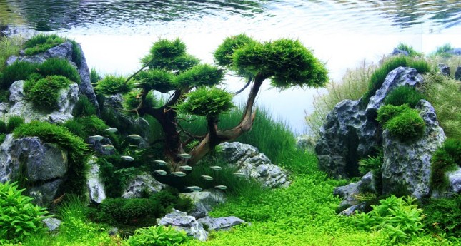 Bonsai Aquascape: Cara Mudah Menata Letak Aquarium Alam Tradisional