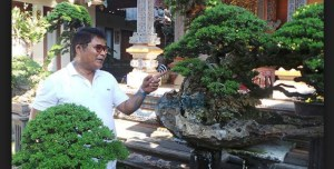Harga Bonsai: Koleksi Bonsai Wayan Artana Laku Rp 350 Juta