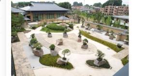 Makna Bonsai: Museum, Tradisi & Esthetika Bonsai Jepang