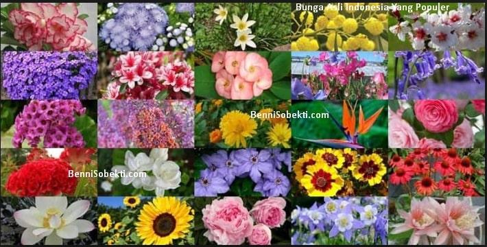 Bunga Hias Asli Indonesia Untuk Taman Paling Populer