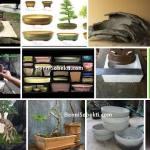 Pot Bonsai: Pedoman & Informasi Mengenai Pot Bonsai