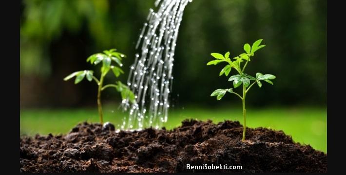 Cara Memeriksa Kelembaban Tanah Bonsai