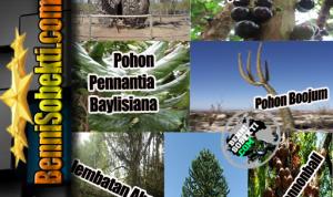 Berbagai Jenis Pohon Teraneh Yang Bisa Kita Cermati