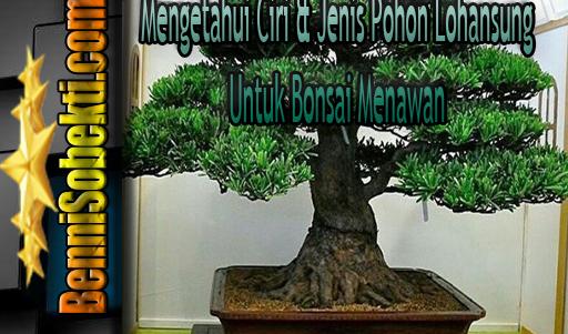 Cara Jitu Mengetahui Ciri & Jenis Pohon Lohansung Untuk Bonsai Menawan