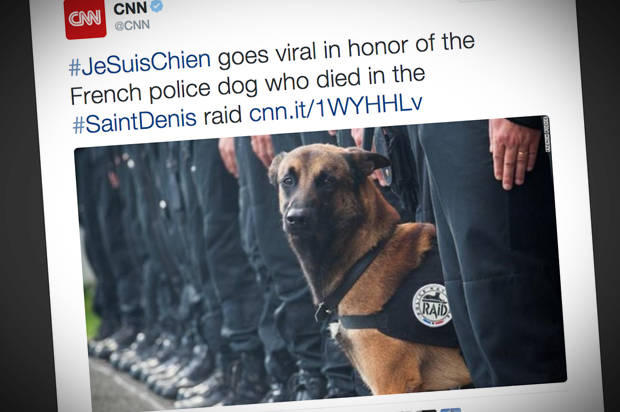 #JeSuisChien, the latest sign racist westerners care more about dead dogs than dead humans