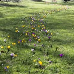 Flowers in backlight
