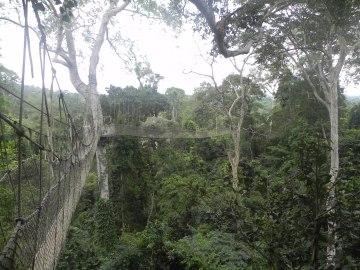 The Canopy Walkway, Kakum Natl Park
