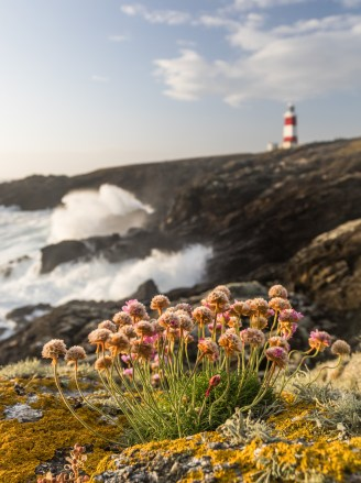 the atlantic swell and thrift