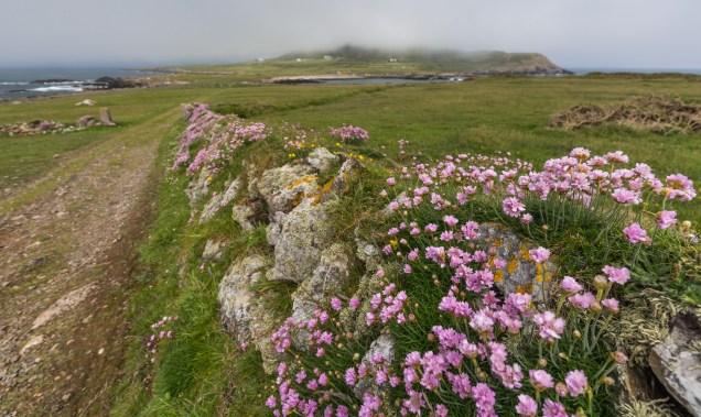Mynydd Enlli shrouded in mist