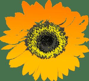 Return Sunflowers to Nursery