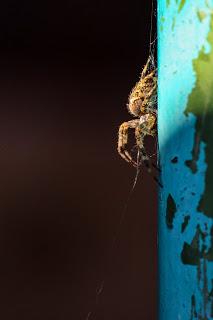 Spider by Benjamin Akira Tallamy